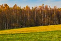 秋天风景视图领域森林秋天颜色 库存照片
