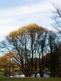秋天风景,公园,乡下,在黑暗的树后的装饰小池塘与黄色叶子,浅兰的天空,云彩 图库摄影