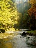 秋天风景,在树,在河的早晨的五颜六色的叶子在多雨夜以后 五颜六色的叶子 免版税库存图片