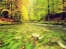 秋天风景,在树,在河的早晨的五颜六色的叶子在多雨夜以后 五颜六色的叶子 免版税图库摄影