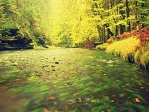秋天风景,在树,在河的早晨的五颜六色的叶子在多雨夜以后 五颜六色的叶子 库存图片