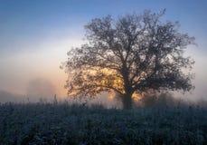 秋天风景,在薄雾的树在黎明 免版税库存图片