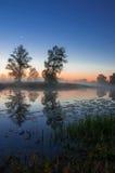 秋天风景,在薄雾的树在黎明 库存照片