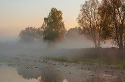 秋天风景,在薄雾的树在黎明 免版税图库摄影