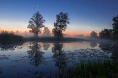 秋天风景,在薄雾的树在黎明 库存图片