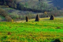 秋天风景,没有叶子的一棵树, iny在绿草, 免版税图库摄影