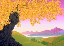 秋天风景, 库存图片