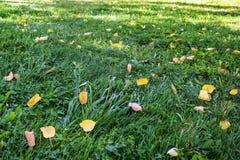 秋天风景:在绿草的第一落叶 免版税库存图片