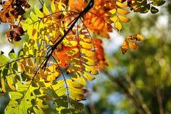 秋天风景-产生颜色的山脉灰树枝在阳光下 免版税图库摄影