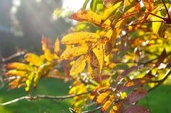 秋天风景-在明亮的阳光的产生颜色的山脉灰树枝 库存照片