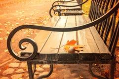 秋天风景-在木偏僻的长凳的被染黄的秋天叶子在秋天公园 免版税库存图片