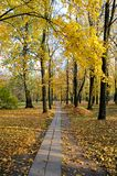 秋天风景-有落叶和堆的一个公园 免版税库存照片