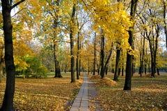 秋天风景-有落叶和堆的一个公园 免版税库存图片