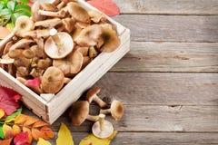 秋天食物 蘑菇 免版税库存照片