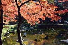 秋天高峰颜色在东京,日本 免版税库存照片