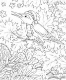 秋天鸟森林唱歌 库存图片