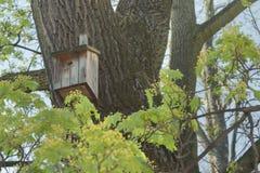 秋天鸟舍离开结构树枝杈黄色 免版税库存图片