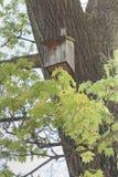 秋天鸟舍离开结构树枝杈黄色 免版税图库摄影