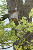 秋天鸟舍离开结构树枝杈黄色 库存照片