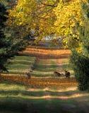 秋天鹿和秋天颜色 免版税库存照片