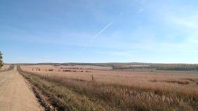 秋天麦田在乌拉尔 股票视频