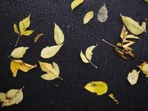 秋天黄色叶子在黑暗的沥青说谎 秋天背景特写镜头上色常春藤叶子橙红 免版税图库摄影