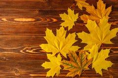 秋天黄色槭树离开以一张老木桌为背景 免版税库存照片