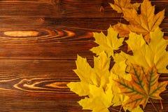 秋天黄色槭树离开以一张老木桌为背景 免版税库存图片