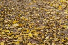 秋天黄色留下背景和纹理 图库摄影