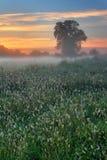 秋天黎明有薄雾的早晨 免版税库存图片