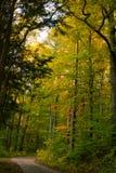 秋天,一个金黄夫人! 库存图片