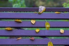 秋天,一部分的生动的长凳在公园,在典型的五行职员留下特写镜头,相似与笔记 五颜六色的背景 免版税库存图片