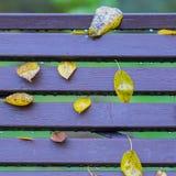 秋天,一部分的生动的长凳在公园,在典型的五行职员留下特写镜头,相似与笔记 五颜六色的正方形 库存照片