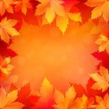 秋天,与明亮的金黄槭树的秋天背景离开 免版税库存照片