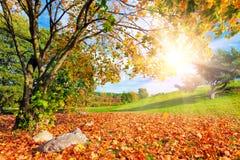 秋天,与树的秋天风景 太阳发光 图库摄影