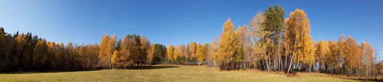 秋天,全景 库存照片