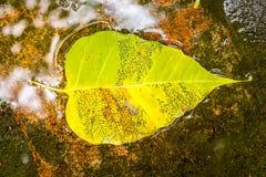 秋天,叶子 黄色水,森林 免版税库存照片