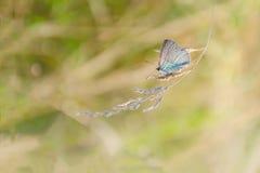 秋天,夏天自然背景 自然的概念 一只蝴蝶的被弄脏的图象在草地早熟禾的 抽象自然Backgro 库存图片