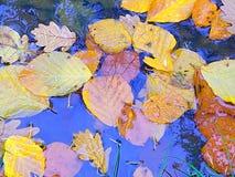 秋天,天空,叶子,晚秋天,水坑 库存图片