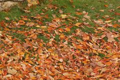秋天,它的与颜色板料叶子的树  背景秀丽颜色绿色本质 免版税图库摄影