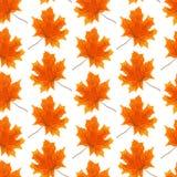 秋天,无缝的p的槭树叶子,明亮和美好的标志 库存图片