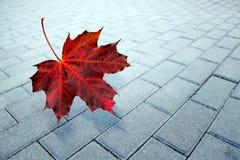 秋天,枫叶在雨中 免版税库存图片