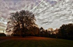 秋天,树,在小山的树 库存图片