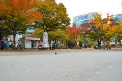 秋天,树 免版税图库摄影