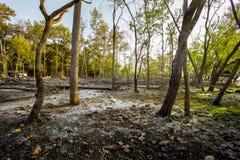 秋天,森林,飓风-风暴,土地,急风 库存图片