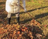 秋天,清扫叶子的妇女清扫秋天的庭院 库存照片