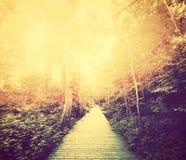 秋天,秋天公园 发光通过红色叶子的太阳 葡萄酒 库存照片