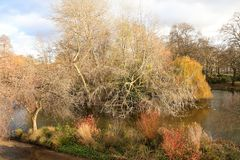 秋天,秋天公园 木道路,在树的五颜六色的叶子 库存图片