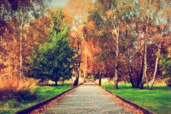 秋天,秋天公园 木道路,在树的五颜六色的叶子 免版税库存图片
