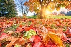 秋天,秋天风景在公园 免版税库存图片